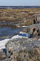 Salt marsh in winter ice; NJ, Delaware Bay