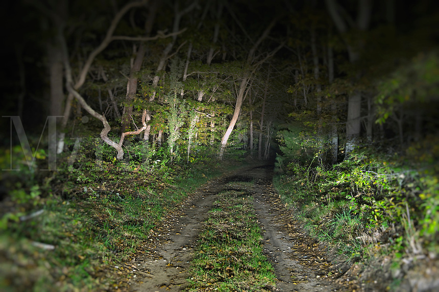 Wooded unpaved road at night.