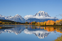 A first coating of snow coats Mt Moran as fall color explode below at Oxbow Bend in Grand Teton National Park, Wyoming.