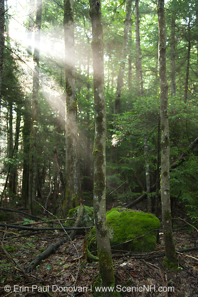 Early morning sun breaks through the forest along the Wilderness Trail in the Pemigewasset Wilderness of Lincoln, New Hampshire.