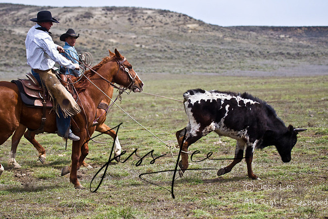 Cowboys working and playing. Cowboy Cowboy Photo Cowboy, Cowboy and Cowgirl photographs of western ranches working with horses and cattle by western cowboy photographer Jess Lee. Photographing ranches big and small in Wyoming,Montana,Idaho,Oregon,Colorado,Nevada,Arizona,Utah,New Mexico.