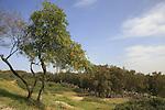 Israel, Sharon region. Alexander River National Park