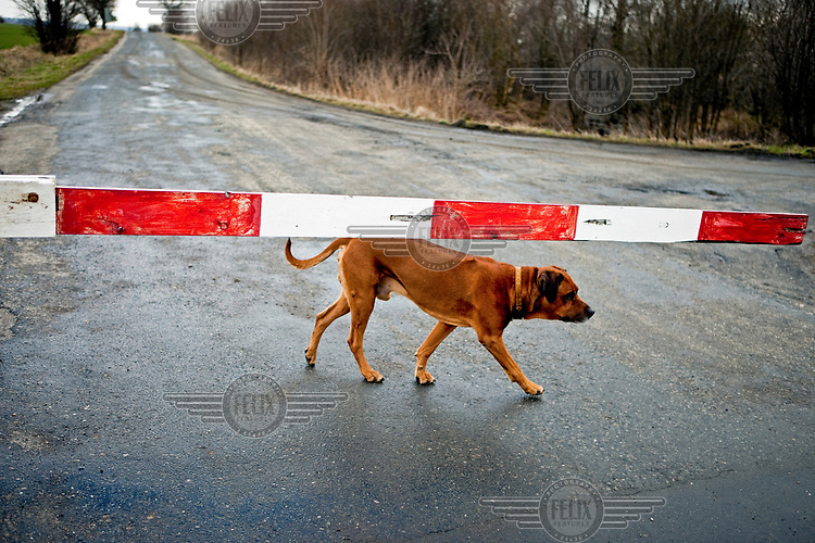 A stray dog waits behind a barrier at a rural level crossing on the rail route from Vsetaty to Mlada Boleslav.