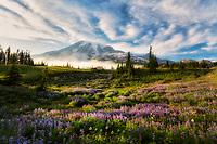 Wildflowers, Mt. Rainier and fog. Mt. Rainier National Park, Waqshington