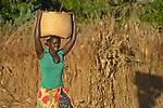 Maureen Ngulube carries corn she has harvested in a basket on her head in Edundu, Malawi. She and other farmers in the village have benefited from intercropping and crop rotation practices they learned from the Malawi Farmer-to-Farmer Agro-Ecology project of the Ekwendeni Mission Hospital AIDS Program, a program of the Livingstonia Synod of the Church of Central Africa Presbyterian.