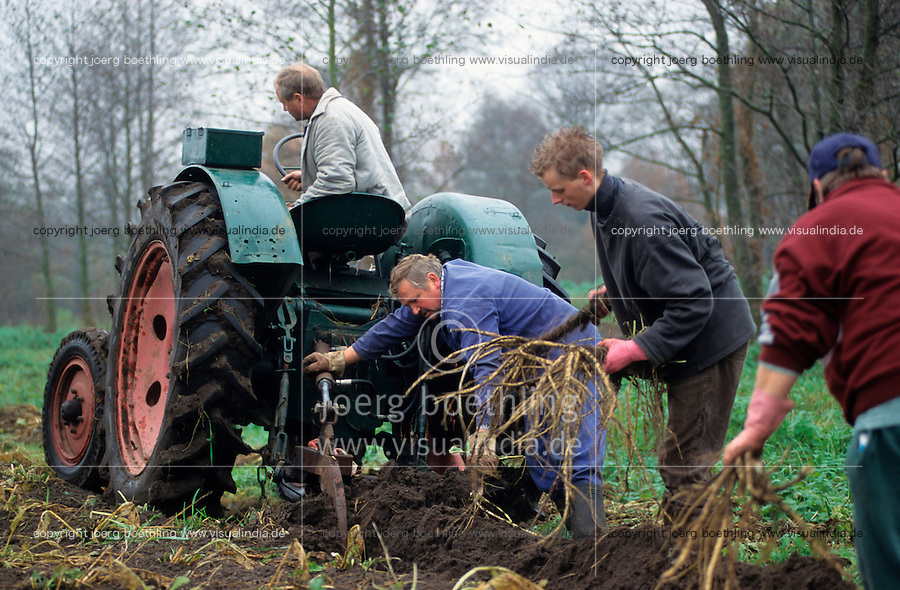 GERMANY, farmer harvest horseradish in Spreewald with old tractor / DEUTSCHLAND, Spreewald, Bauer ernten Meerrettich mit altem Famulus Traktor