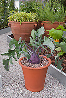 Vegetable Container Garden Images