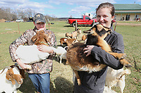 NWA Democrat-Gazette/DAVID GOTTSCHALK  Sicily Burnett (left), 12, and her sister Sierra hold a pair of their goats Thursday, March 14, 2018, on the family farm, D4S Farms, in Winslow. The Burnett family tends poultry, cattle, hogs, ducks and the goats on the 500 acre farm.