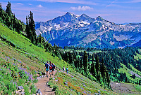 Hikers descending Skyline Trail with Stevens and Unicorn Peaks in backdrop, Mount Rainier National Park, Washington State. Photoshop adjusted with Dry Brush filter.
