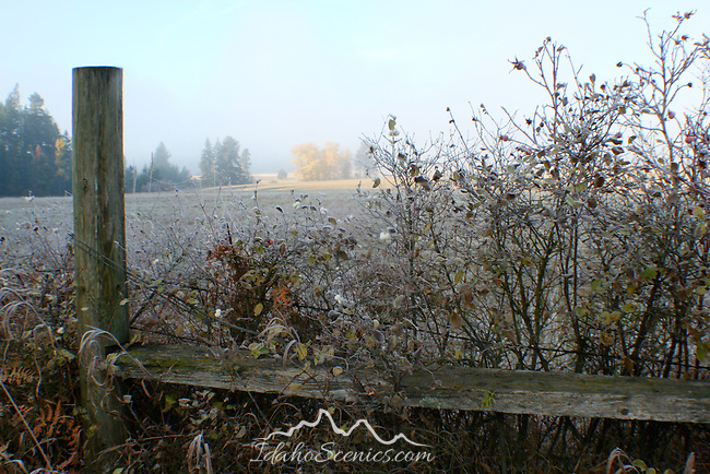 Snowberries and rose hips covered in frost  help enforce a boundary fence as dawn breaks over a North Idaho meadow
