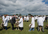 Sheep being judged at the Gillingham Agricultural Show, Somerset, England.