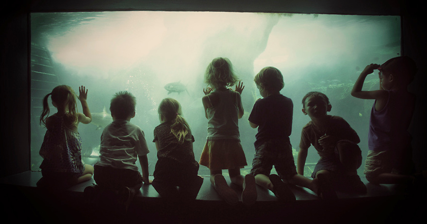 Silhouette of children looking into aquarium window