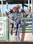 Bobby Mote competes in the bareback bronc riding event at the Reno Rodeo in Reno, Nev. on Friday, June 19, 2015.<br /> Photo by Cathleen Allison/Nevada Photo Source