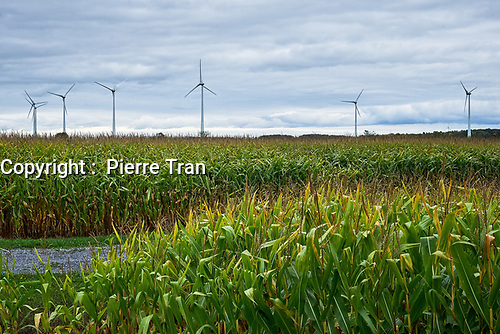 Eloliennes au Quebec, 2019<br /> <br /> PHOTO : Agence Quebec Presse - Pierre Tran