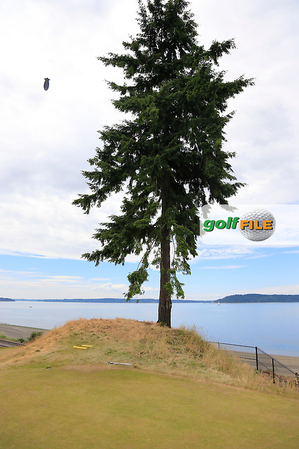 Lone tree at the 16th tee during Thursday's Round 1 of the 2015 U.S. Open 115th National Championship held at Chambers Bay, Seattle, Washington, USA. 6/18/2015.<br /> Picture: Golffile | Eoin Clarke<br /> <br /> <br /> <br /> <br /> All photo usage must carry mandatory copyright credit (&copy; Golffile | Eoin Clarke)
