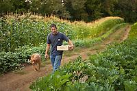 Manuel Recio, farmer, Viridian Farms walking his dog gathering samples for harvest