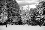 A forest in the snow