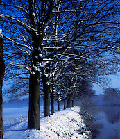 Winter scene of trees next to river Swale in North Yorkshire, U.K