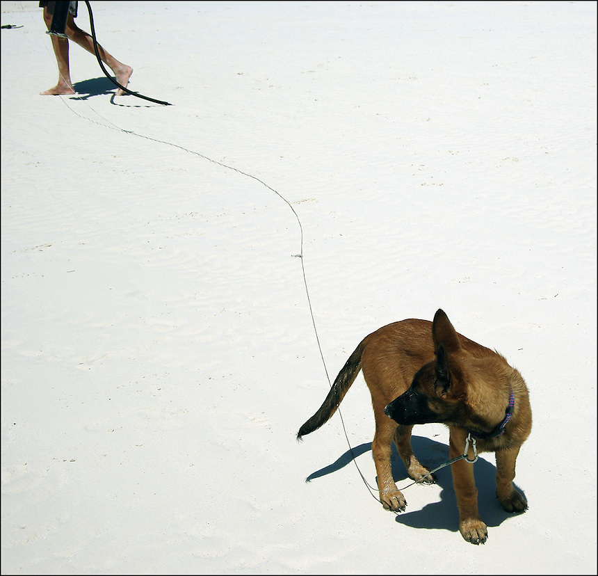 "On the leash<br /> From ""Color Blind"" series. Miami, 2010"