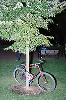 """A bike leans against a tree as entrepreneur and Democratic presidential candidate Andrew Yang speaks to a large crowd in Cambridge Common near Harvard Square in Cambridge, Massachusetts, on Mon., September 16, 2019. Yang's unlikely presidential bid is centered on his idea for a """"Freedom dividend,"""" which would give USD$1000 per month to every adult in the United States. After appearing in three Democratic party debates, Yang has risen in polls from longshot candidate to within the top 10."""