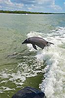 TAE- Dolphin Explorer Cruise, Naples FL 12 13