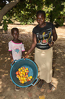 Woman and Young Boy Collect Cashew Apples and Nuts from the Ground, near Sokone, Senegal.  Fruits must be collected after they fall  to the ground, and not picked from the tree.
