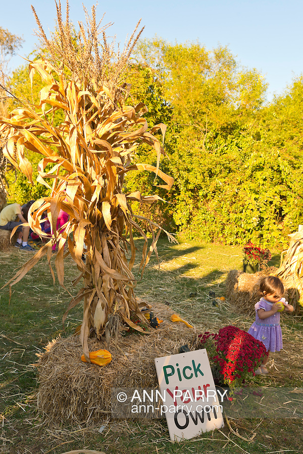 Old Bethpage, New York, U.S. 29th September 2013. A young girl walks in the Pumpkin Patch at The Long Island Fair. A yearly event since 1842, the county fair now is held at a reconstructed fairground at Old Bethpage Village Restoration.