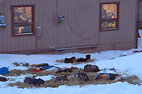 Dogs Rest in Early Morning While Mushers Eat Inside<br /> Takotna 2004 Iditarod