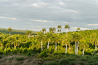 A mountain landscape with palm trees near La Güira, Pinar del Rio, Cuba.