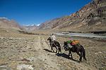 Ranger Temirlan Baktygul on horseback with gear, Sarychat-Ertash Strict Nature Reserve, Tien Shan Mountains, eastern Kyrgyzstan