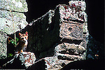 [PHOTO AVAILABLE in PRINT ONLY]<br /> (UNESCO WORLD HERITAGE SITE)<br /> <br /> CAT PERCHES HIGH UPON STONE RUINS OF ANGKOR WAT