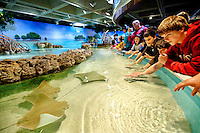 The New England Aquarium in Boston, Mass., is home to the largest shark and ray touch tank on the East Coast. The Trust Family Foundation Shark and Ray Touch Tank, which opened in April 2011, lets visitors touch cownose rays, Atlantic rays, bonnethead sharks and epaulette sharks.