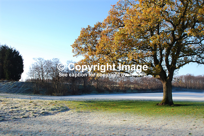 Tree, frost, autumn, winter, playing fields, Queen's University, Upper Malone, Belfast, N Ireland, 200811301610..Copyright Image from Victor Patterson, 54 Dorchester Park, Belfast, N Ireland, BT9 6RJ...Tel: +44 28 9066 1296.Mob: +44 7802 353836.Fax: +7092 356429.Email: victorpatterson@mac.com..IMPORTANT: The copyright of my photographs is not for sale. Only a licence to publish, subject to the terms and conditions, is on offer. See my website.