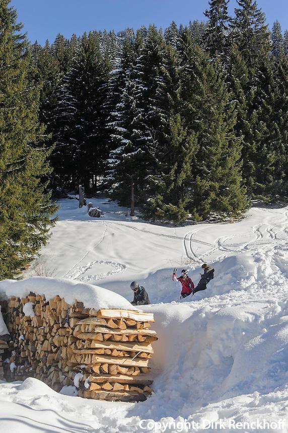 Wald  auf dem S&ouml;llereck bei  Oberstdorf im Allg&auml;u, Bayern, Deutschland<br /> forest on Mt.  Sellereck  near Oberstdorf, Allg&auml;u, Bavaria, Germany