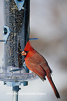 01530-13620 Northern Cardinal (Cardinalis cardinalis) male at sunflower tube feeder in winter Marion Co.  IL