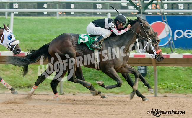 Tiger Walk winning at Delaware Park on 7/4/13