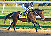 Colony Strike winning at Delaware Park on 10/15/16   with Daniel Centeno aboard earning him his 4th win of the day