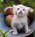Judi - Misc. Kittens