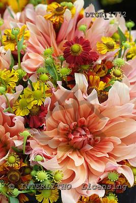 Gisela, FLOWERS, photos, DTGK1772,#F# Blumen, flores, retrato