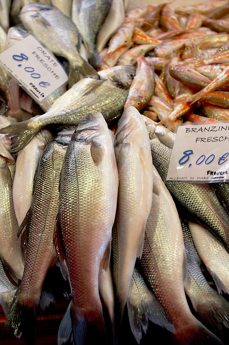 Fresh Sea Food & Fish,  Bass - Chioggia - Venice Italy