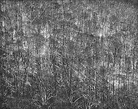 &quot;Trees and Sunlight&quot; Great Smoky Mountains National Park, North Carolina<br />