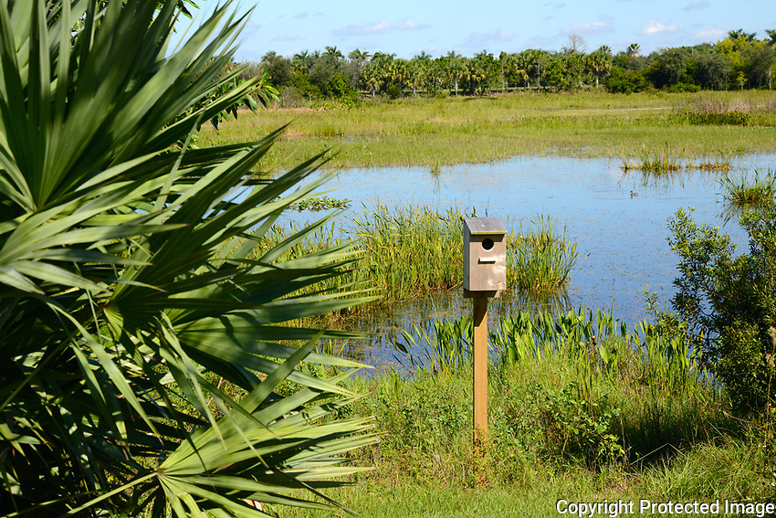 Birdhouse awaiting a tenant. Located at Wellington Environmental Preserve, Wellington, Florida.