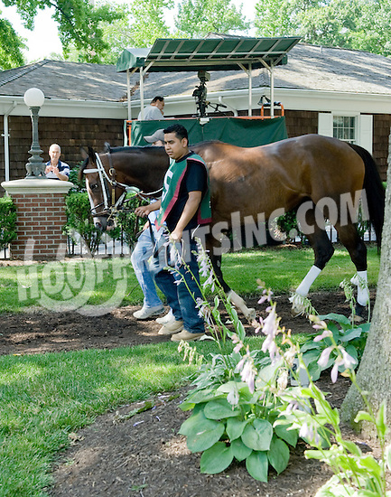 Tiz Miz Sue before The Obeah Stakes (gr3) at Delaware Park on 6/16/12