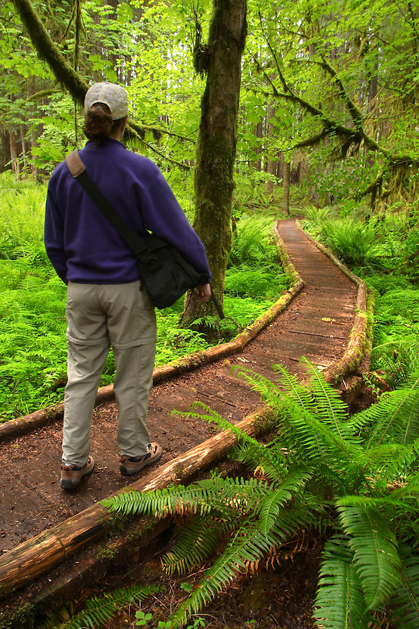 Woman hiking on trail through old growth temperate rain forest, Soleduck River Valley, Olympic National Park, Olympic Peninsula, Clallam County, Washington, USA
