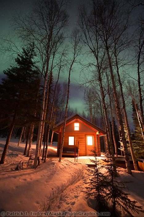 Aurora borealis and boreal forest in Fairbanks, Alaska.