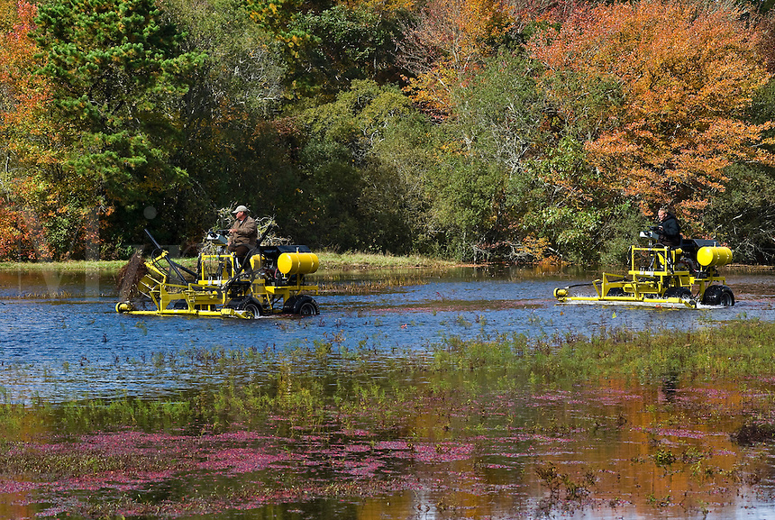 Flooded cranberry bog, Harwhich, Cape Cod, MA