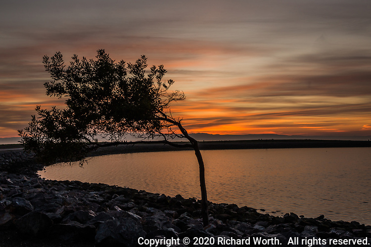 Sunset and the wind blown tree at the southern end of the small boat lagoon at the San Leandro Marina Park along San Francisco Bay.