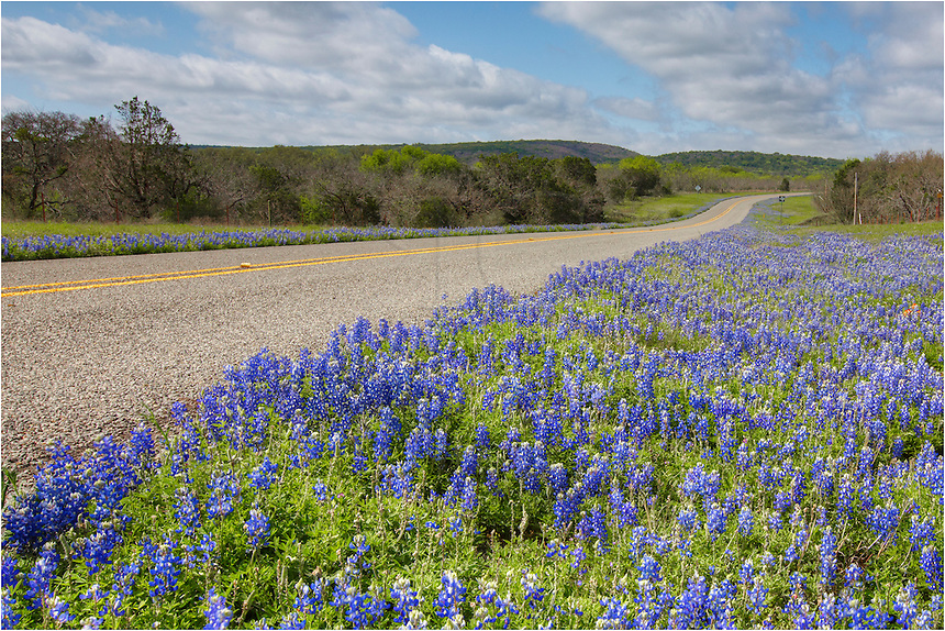 Traveling along CR 3347, you can often find nice Texas Wildflowers each spring. In this bluebonnet image, the bluebonnets were creeping along the roadside - enough to make me stop and capture this Texas wildflower image with the morning clouds drifting overhead.
