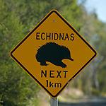 Panneau attention Echnidés . Ile de Kangourou (Australie du Sud)