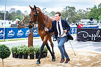 AUS-Andrew Cooper with Darwin Park Echo during the CCI2* First Horse Inspection. 2017 AUS-Mitsubishi Motors Australian International 3 Day Event. Victoria Park, Adelaide. Wednesday 15 November. Copyright Photo: Libby Law Photography